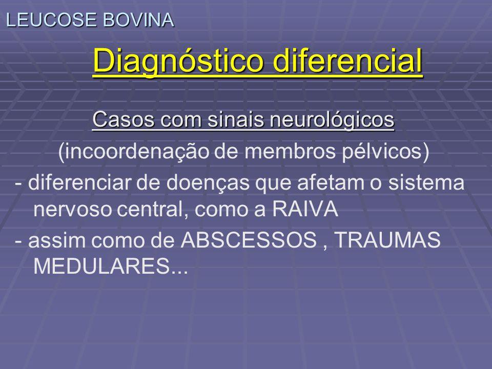 LEUCOSE BOVINA Diagnóstico diferencial Casos com sinais neurológicos (incoordenação de membros pélvicos) - diferenciar de doenças que afetam o sistema