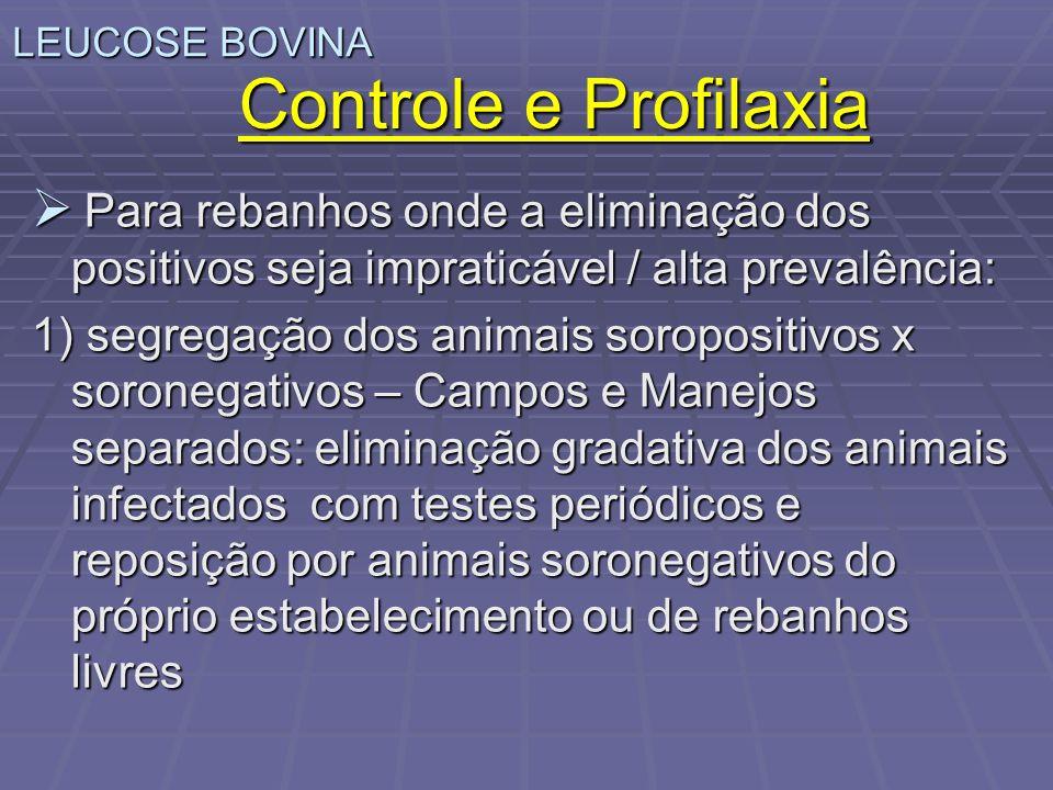 LEUCOSE BOVINA Controle e Profilaxia Para rebanhos onde a eliminação dos positivos seja impraticável / alta prevalência: Para rebanhos onde a eliminaç