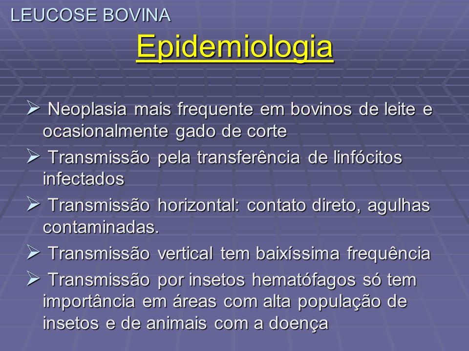 Epidemiologia Neoplasia mais frequente em bovinos de leite e ocasionalmente gado de corte Neoplasia mais frequente em bovinos de leite e ocasionalment