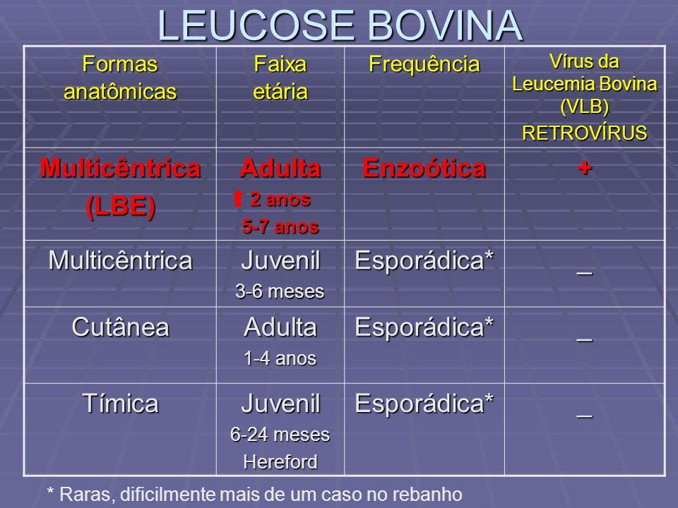 LEUCOSE BOVINA Formas anatômicas Faixa etária Frequência Vírus da Leucemia Bovina (VLB) RETROVÍRUS Multicêntrica(LBE)Adulta 2 anos 5-7 anos Enzoótica+