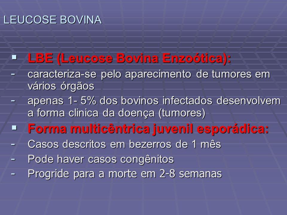 LBE (Leucose Bovina Enzoótica): LBE (Leucose Bovina Enzoótica): - caracteriza-se pelo aparecimento de tumores em vários órgãos - apenas 1- 5% dos bovi