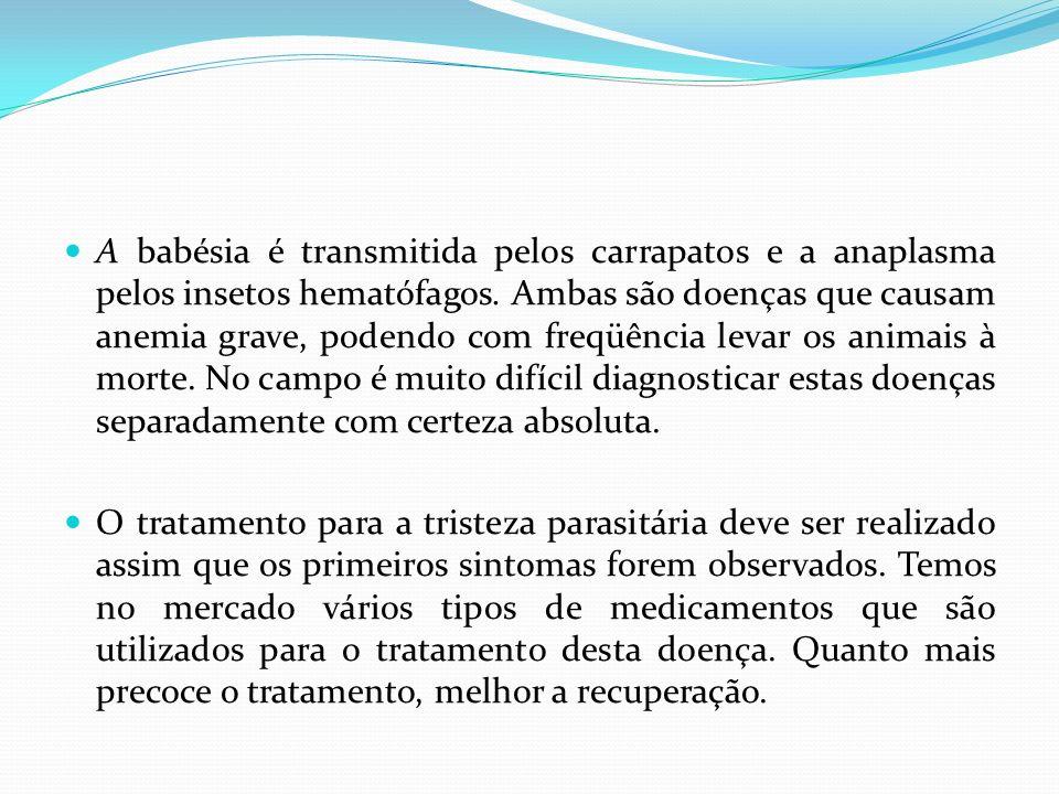 A babésia é transmitida pelos carrapatos e a anaplasma pelos insetos hematófagos. Ambas são doenças que causam anemia grave, podendo com freqüência le