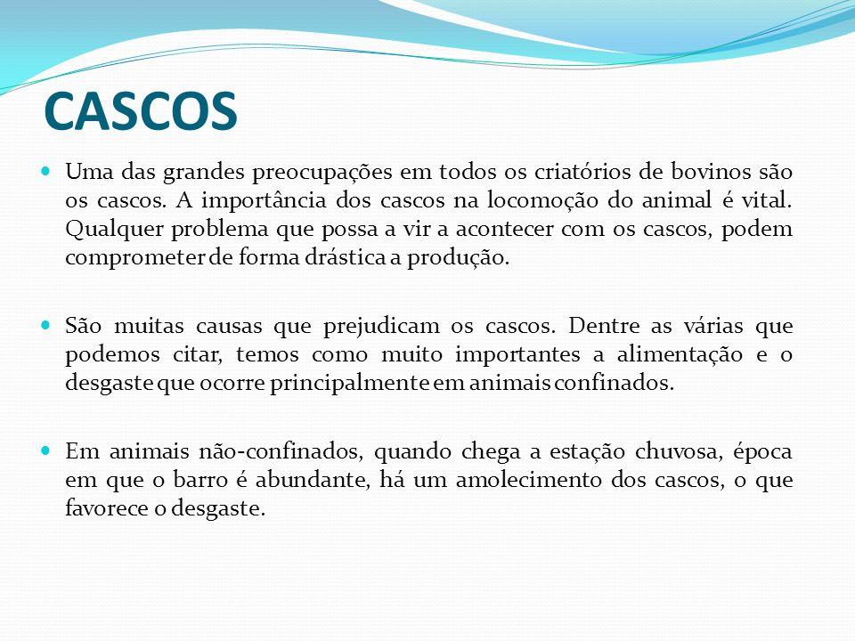 CASCOS Uma das grandes preocupações em todos os criatórios de bovinos são os cascos. A importância dos cascos na locomoção do animal é vital. Qualquer