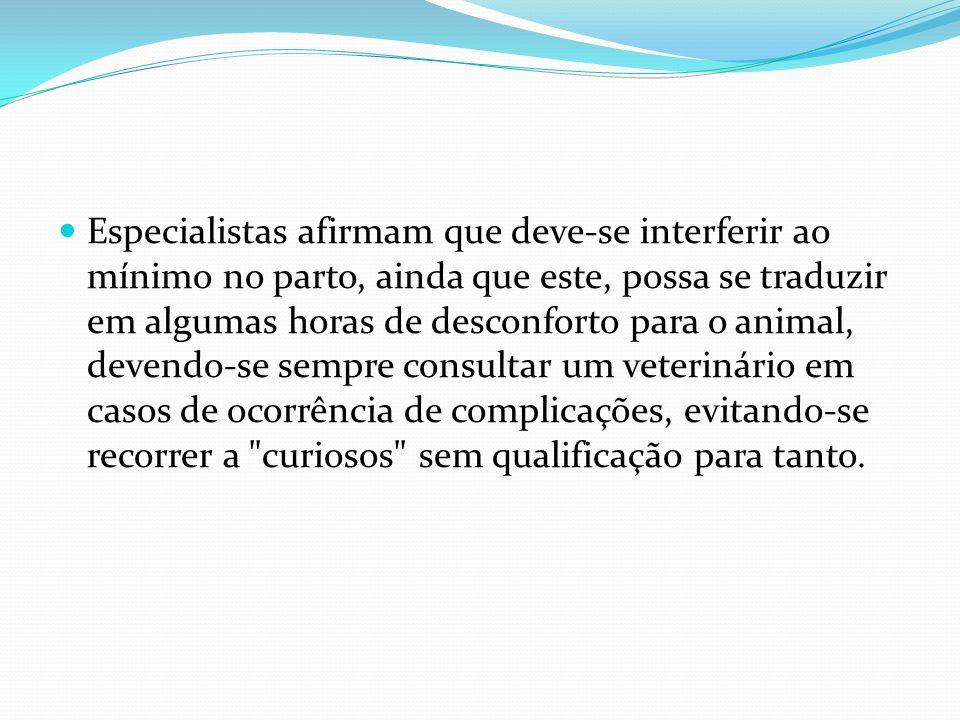 Especialistas afirmam que deve-se interferir ao mínimo no parto, ainda que este, possa se traduzir em algumas horas de desconforto para o animal, deve
