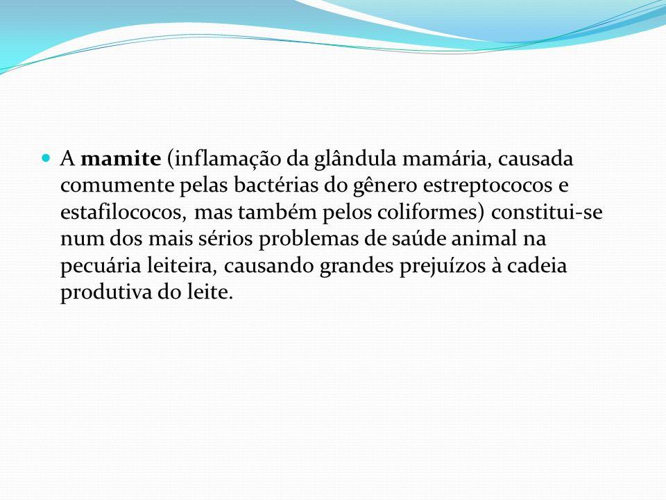 A mamite (inflamação da glândula mamária, causada comumente pelas bactérias do gênero estreptococos e estafilococos, mas também pelos coliformes) cons