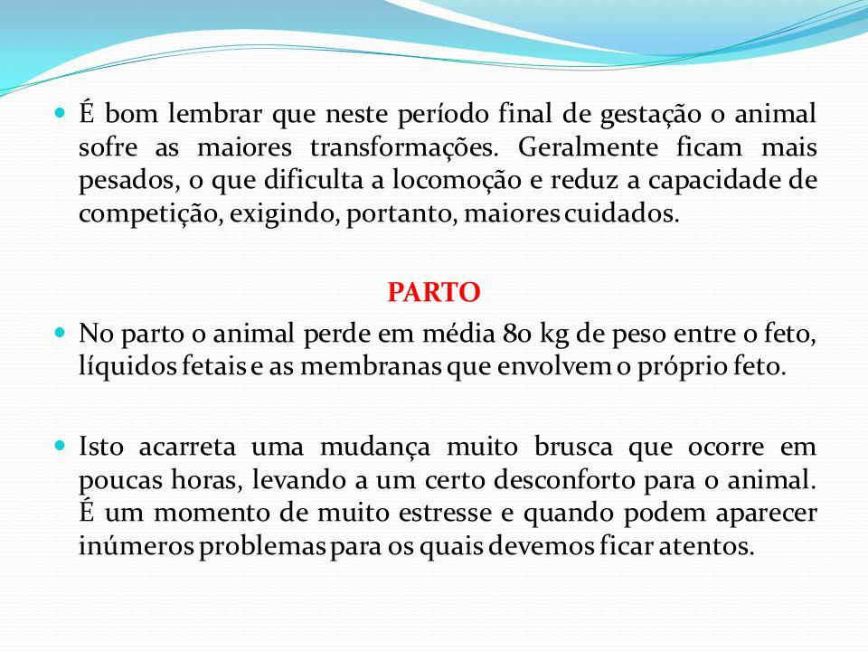 É bom lembrar que neste período final de gestação o animal sofre as maiores transformações. Geralmente ficam mais pesados, o que dificulta a locomoção