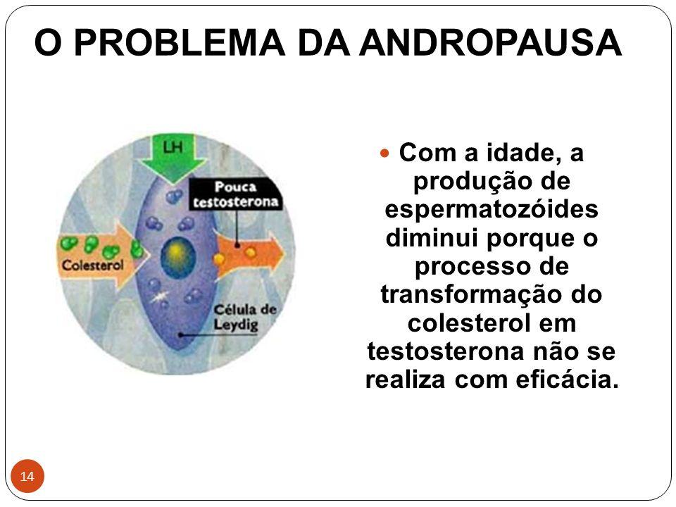 14 O PROBLEMA DA ANDROPAUSA Com a idade, a produção de espermatozóides diminui porque o processo de transformação do colesterol em testosterona não se