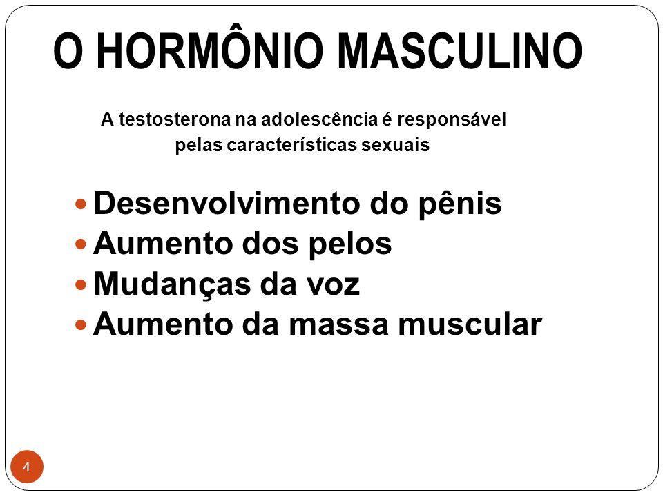 4 O HORMÔNIO MASCULINO A testosterona na adolescência é responsável pelas características sexuais Desenvolvimento do pênis Aumento dos pelos Mudanças