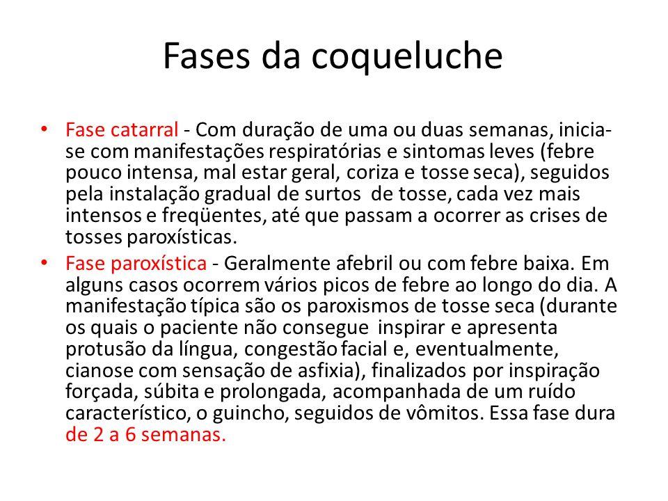 Fases da coqueluche Fase catarral - Com duração de uma ou duas semanas, inicia- se com manifestações respiratórias e sintomas leves (febre pouco inten