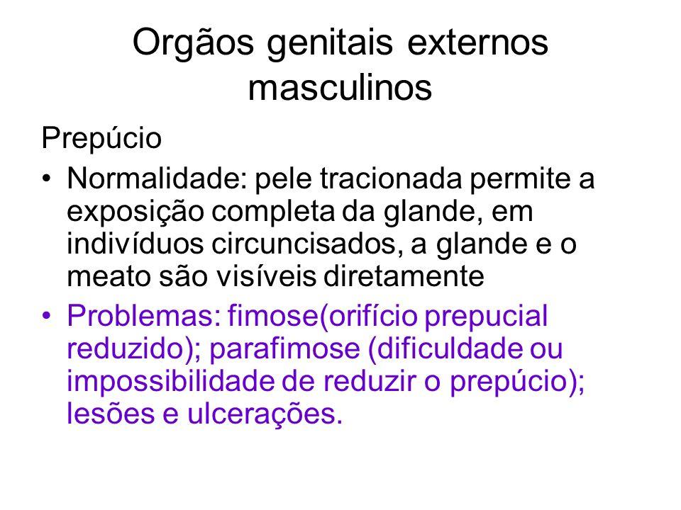Orgãos genitais externos masculinos Prepúcio Normalidade: pele tracionada permite a exposição completa da glande, em indivíduos circuncisados, a gland