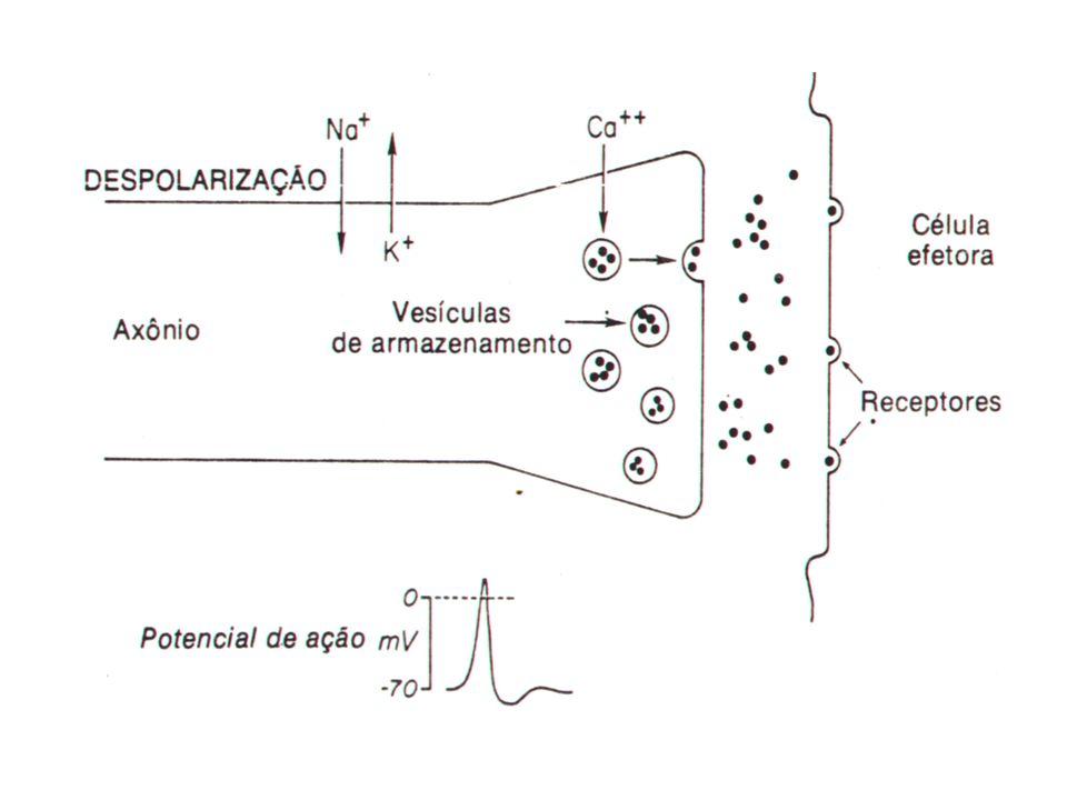 M.P.A. Antagonistas Naloxona -dose: 0,04-1,0 mg/Kg (IV,IM ou SC) -Duração 30 min. Naltrexona