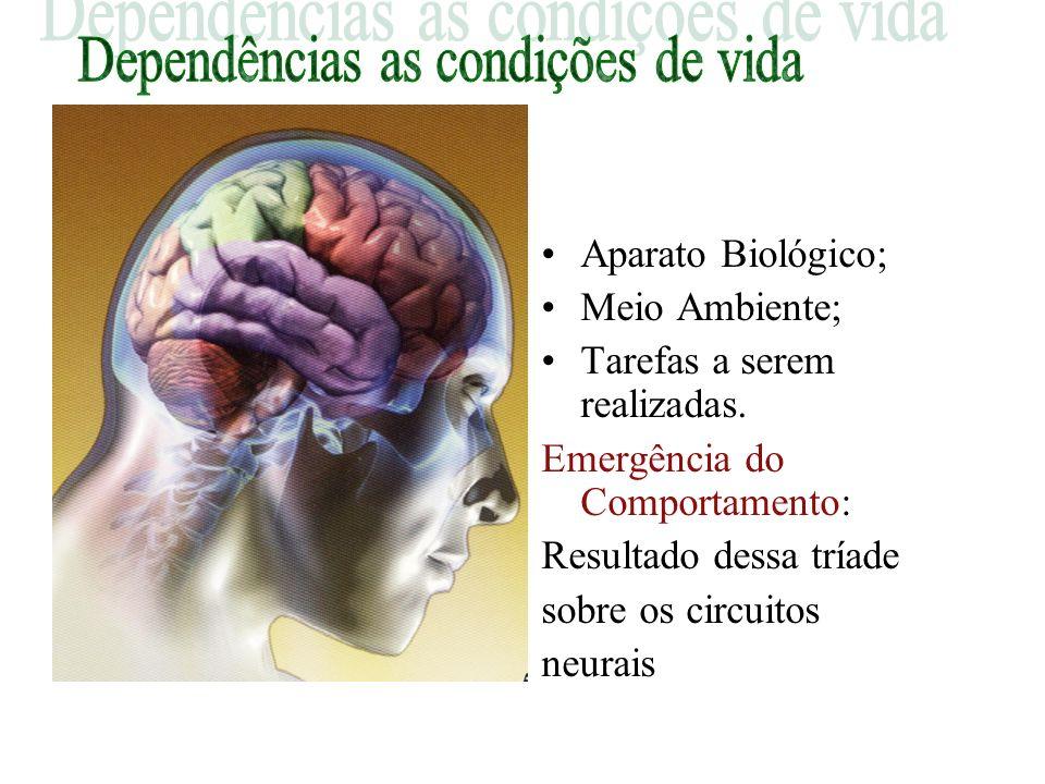 Psicomotricidade Alterações na atividade neural Mudanças na comunicação neural Novas redes neurais Nova estrutura cerebral Novo modo de funcionamento.