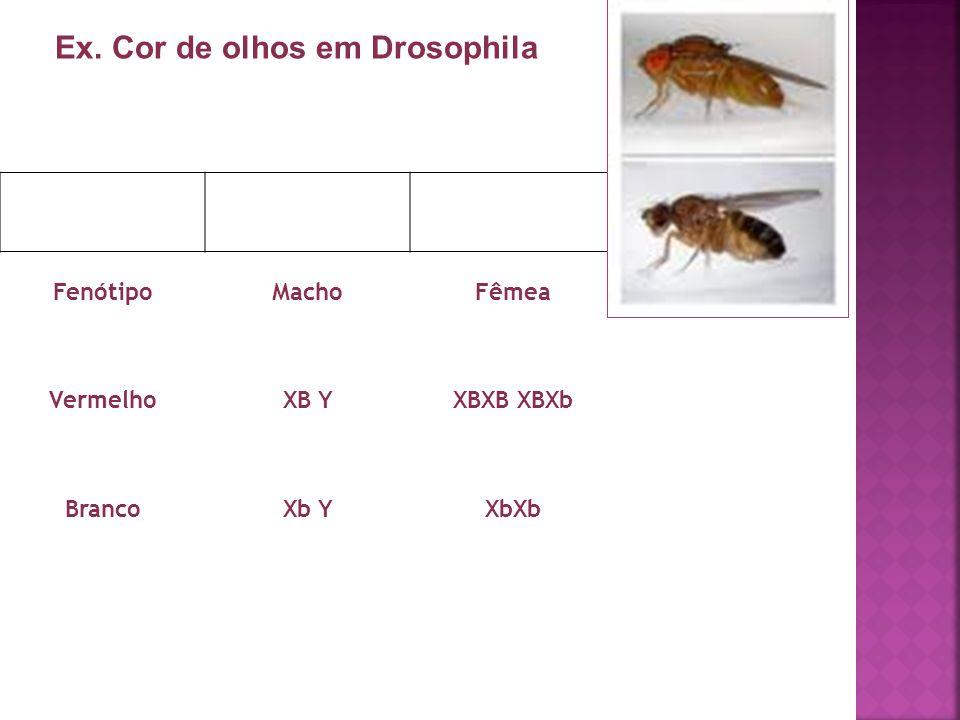 FenótipoMachoFêmea VermelhoXB YXBXB XBXb BrancoXb YXbXb Ex. Cor de olhos em Drosophila