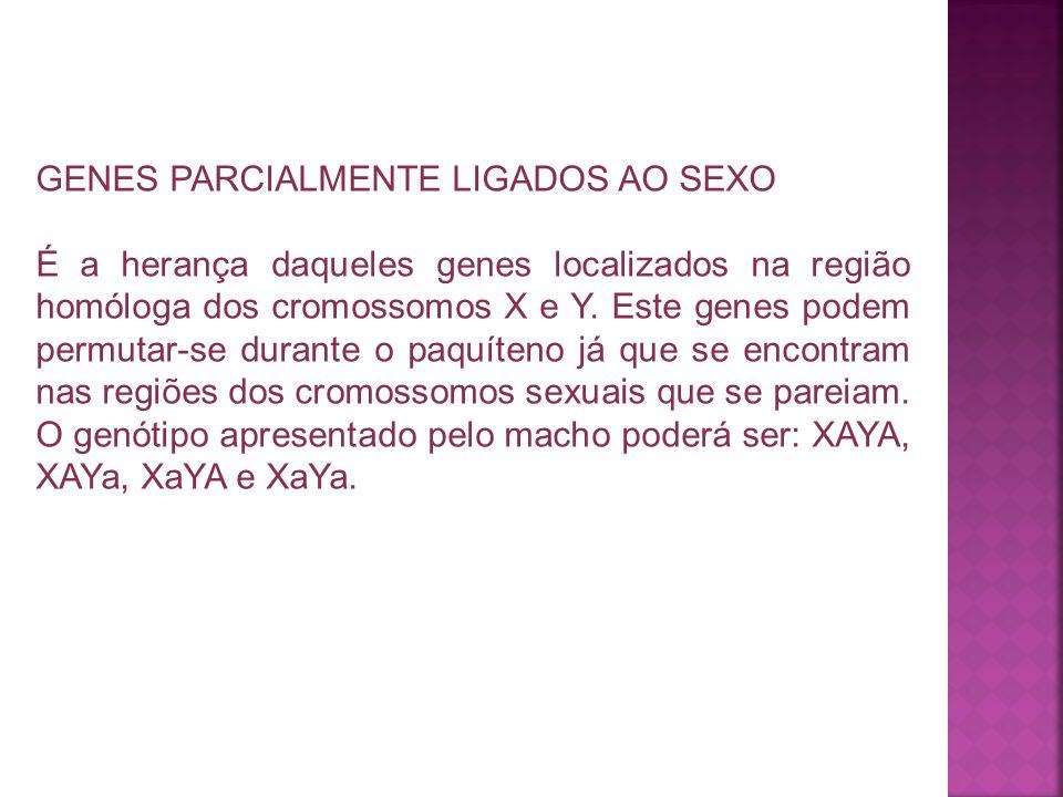 GENES PARCIALMENTE LIGADOS AO SEXO É a herança daqueles genes localizados na região homóloga dos cromossomos X e Y. Este genes podem permutar-se duran