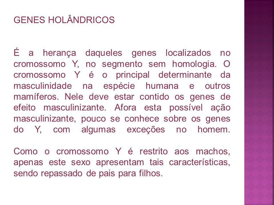 GENES HOLÂNDRICOS É a herança daqueles genes localizados no cromossomo Y, no segmento sem homologia. O cromossomo Y é o principal determinante da masc