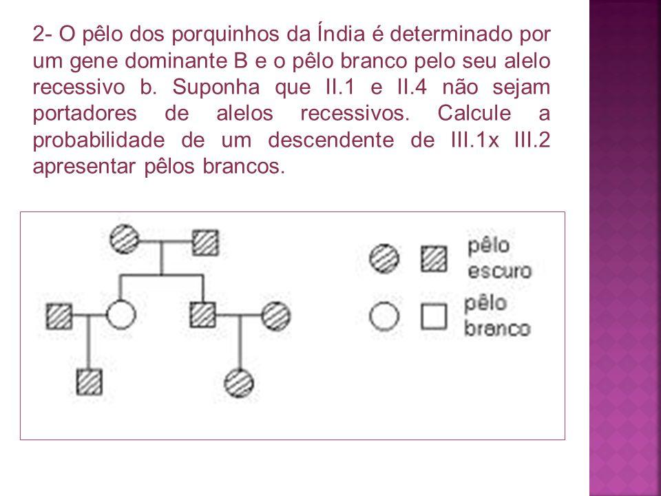 2- O pêlo dos porquinhos da Índia é determinado por um gene dominante B e o pêlo branco pelo seu alelo recessivo b. Suponha que II.1 e II.4 não sejam
