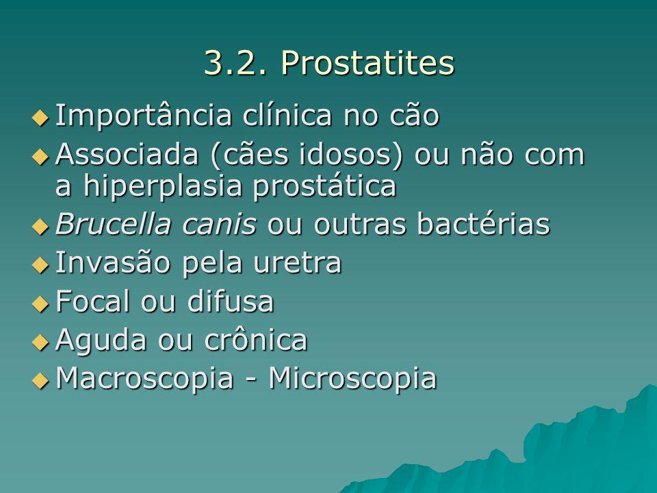 3.2. Prostatites Importância clínica no cão Importância clínica no cão Associada (cães idosos) ou não com a hiperplasia prostática Associada (cães ido