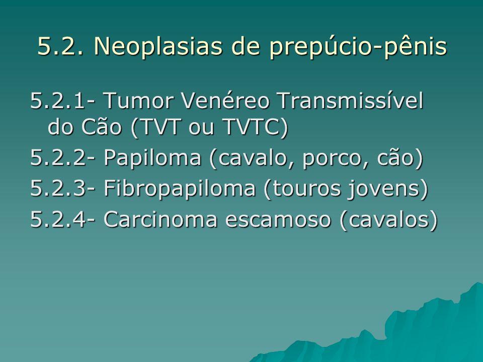 5.2. Neoplasias de prepúcio-pênis 5.2.1- Tumor Venéreo Transmissível do Cão (TVT ou TVTC) 5.2.2- Papiloma (cavalo, porco, cão) 5.2.3- Fibropapiloma (t