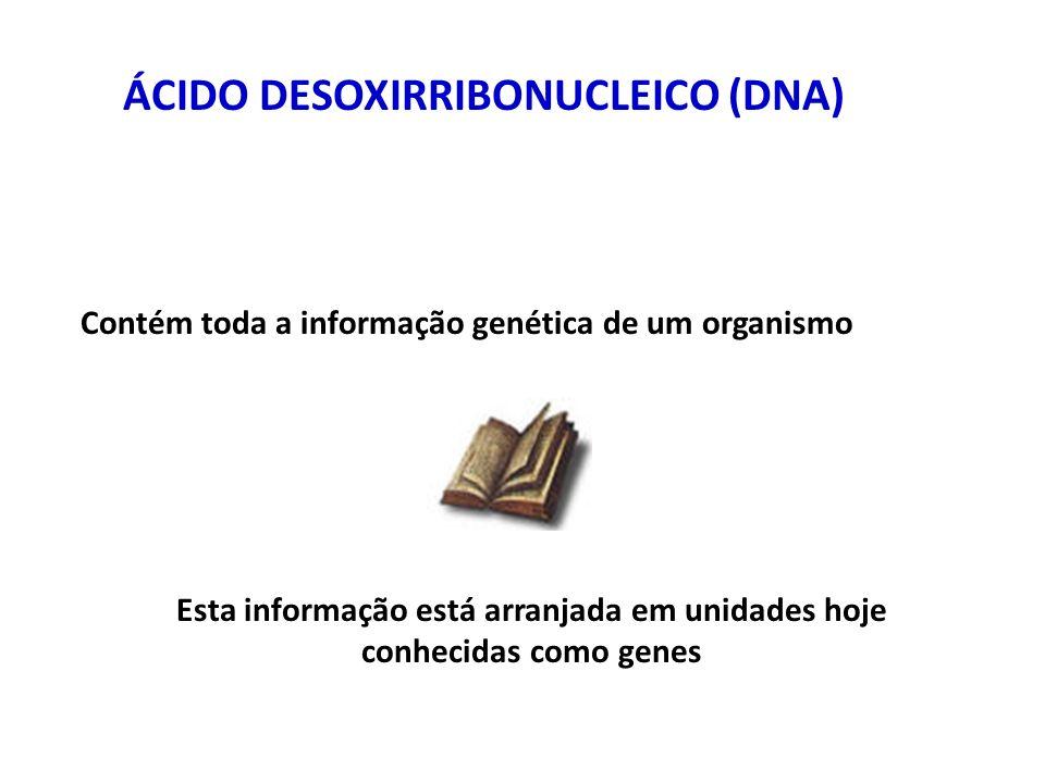 ÁCIDO DESOXIRRIBONUCLEICO (DNA) Contém toda a informação genética de um organismo Esta informação está arranjada em unidades hoje conhecidas como genes