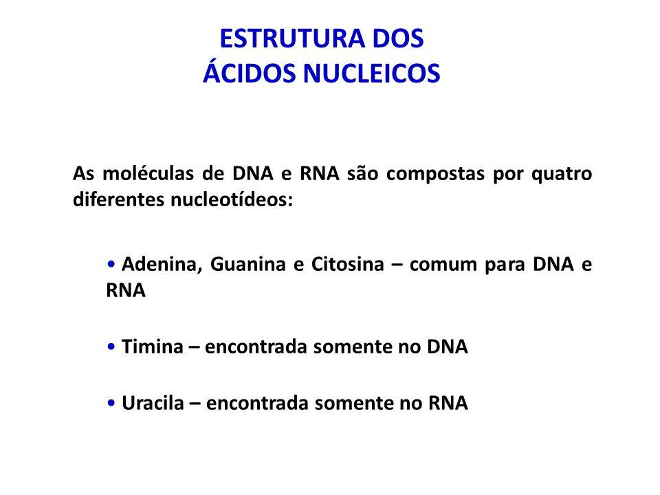 ÁCIDO DESOXIRRIBONUCLEICO (DNA) Contém toda a informação genética de um organismo Esta informação está arranjada em unidades hoje conhecidas como gene