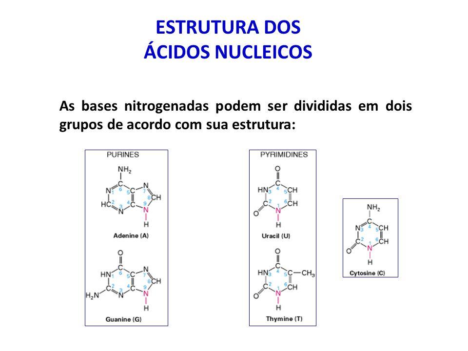 ESTRUTURA DOS ÁCIDOS NUCLEICOS Todos os nucleotídeos apresentam uma estrutura em comum: radical fosfato pentose