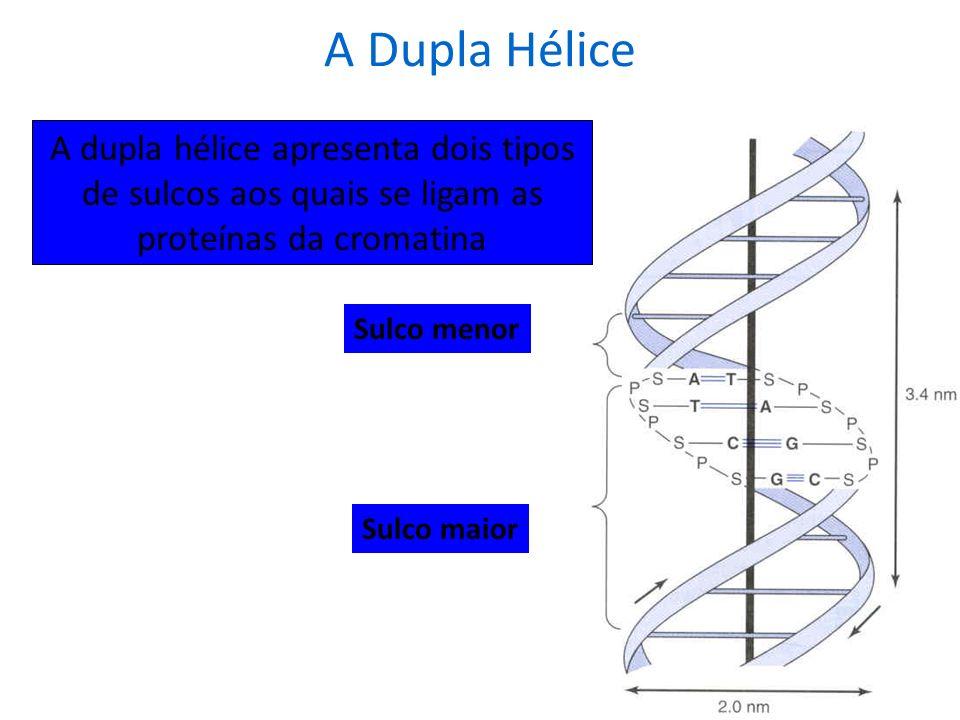 Fatores que estabilizam a dupla hélice: interações hidrofóbicas forças de van der Walls pontes de hidrogênio interações iônicas Entre as bases nitroge