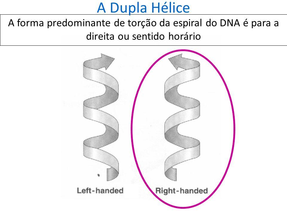 O Empacotamento do DNA: a estrutura terciária do DNA DNA em procariontes: DNA circular nas formas não-super- helicoidal (esquerda) e super-helicoidal