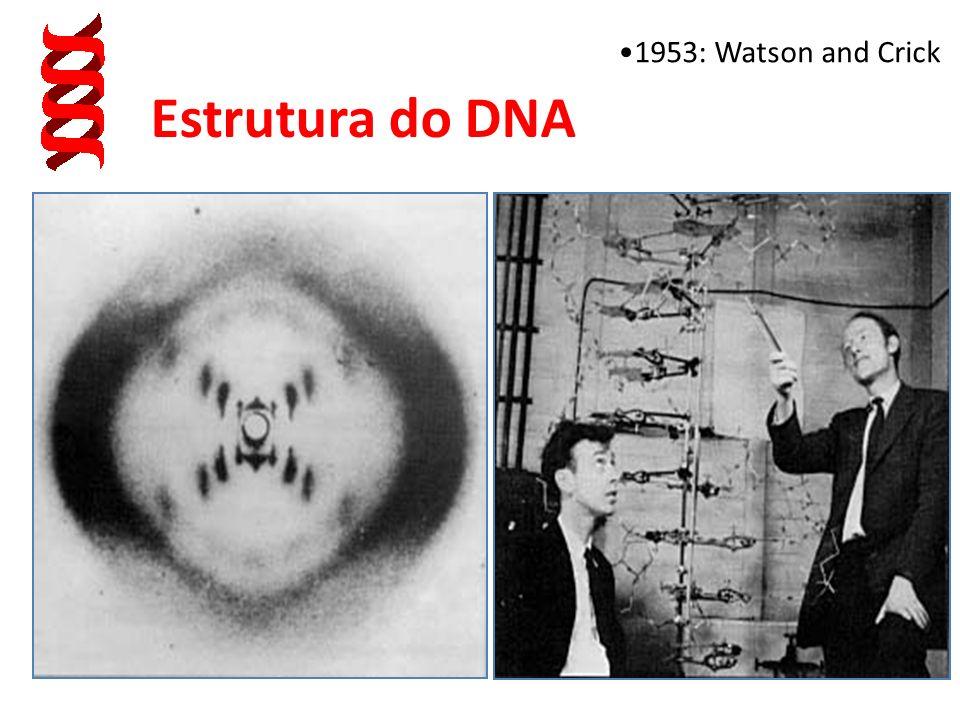 ORGANISMO CÉLULA NÚCLEO CROMOSSOMOS (DNA+PROTEÍNAS) - Informação das proteínas e RNAs que serão sintetizadas pelas células do organismo ao longo da su