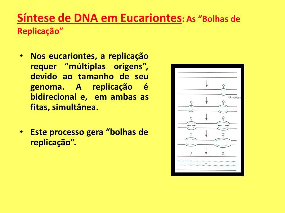 REPLICAÇÃO BIDIRECIONAL Um experimento através da autoradiografia de moléculas de DNA marcadas de culturas de células mamárias revelou grupos de repli