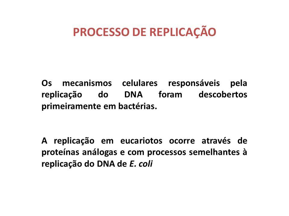 Região Gênica É a porção que codifica para um produto final, que pode ser uma cadeia polipeptídica ou um RNA O DNA é formado por 2 regiões: GênicasInt