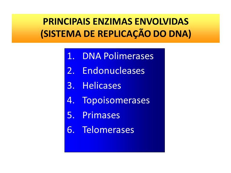 PROCESSO DE REPLICAÇÃO Os mecanismos celulares responsáveis pela replicação do DNA foram descobertos primeiramente em bactérias. A replicação em eucar