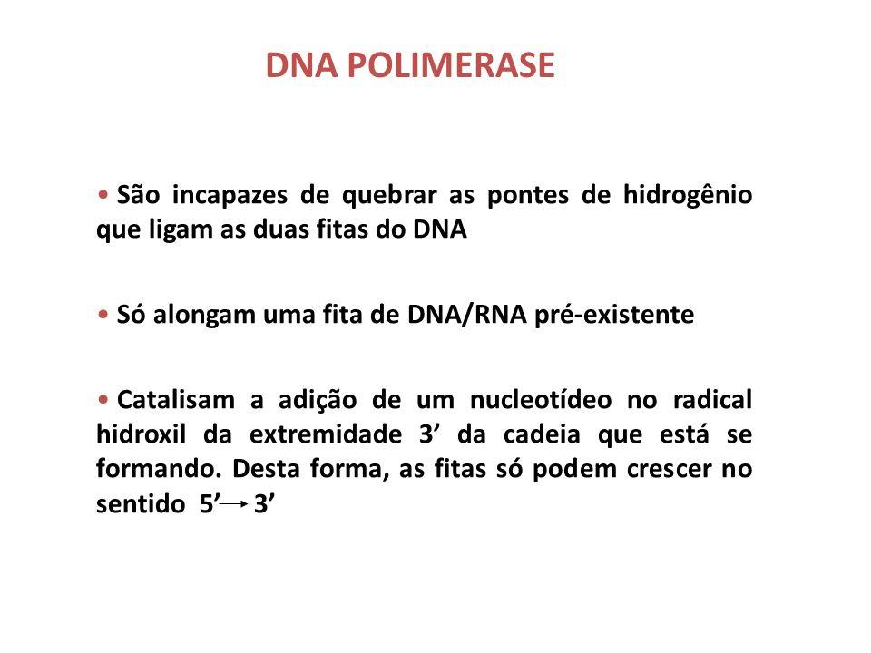 PRINCIPAIS ENZIMAS ENVOLVIDAS (SISTEMA DE REPLICAÇÃO DO DNA) 1.DNA Polimerases 2.Endonucleases 3.Helicases 4.Topoisomerases 5.Primases 6.Telomerases