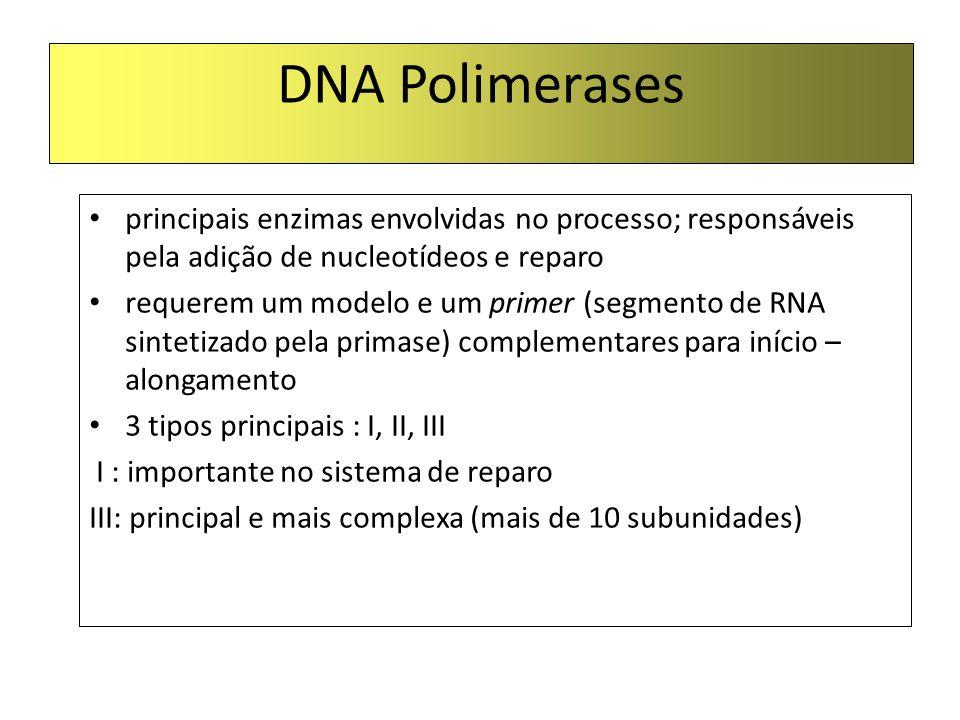 DNA POLIMERASE São incapazes de quebrar as pontes de hidrogênio que ligam as duas fitas do DNA Só alongam uma fita de DNA/RNA pré-existente Catalisam