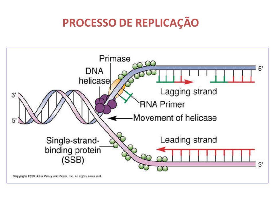 PROCESSO DE REPLICAÇÃO FITA LEADING – sintetizada continuadamente a partir de um iniciador na fita molde 3 5 FITA LAGGING – sintetizada descontinuadam