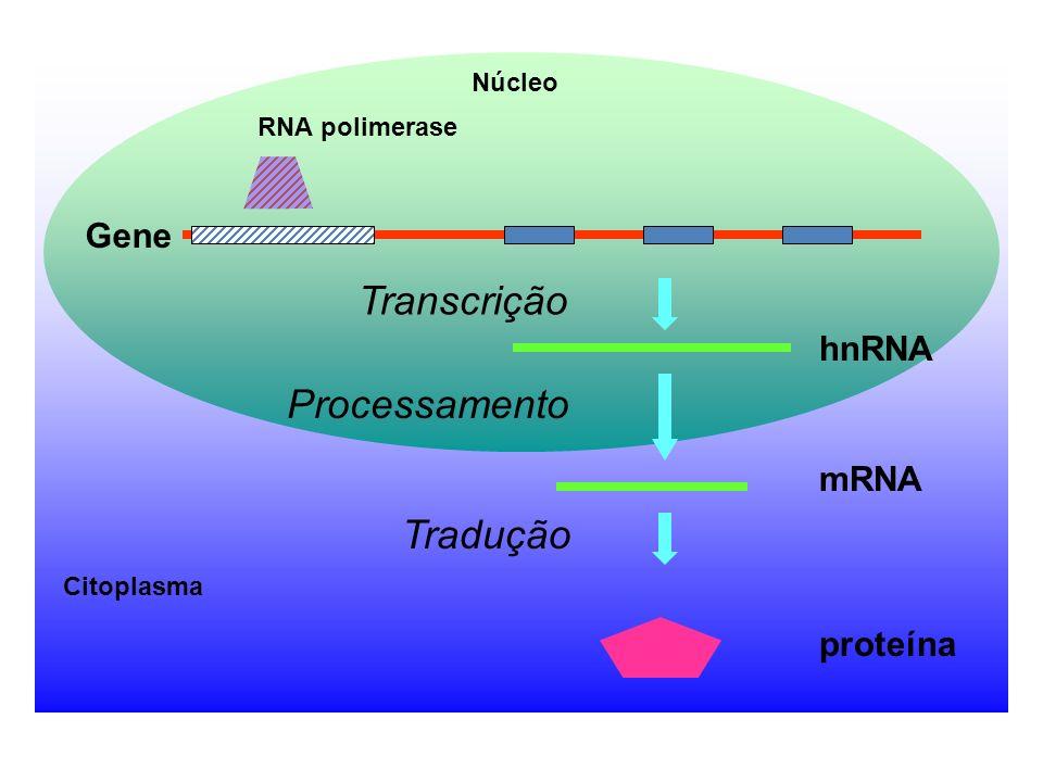 REGULAÇÃO -única fase regulada da replicação, de forma que só ocorra uma vez por ciclo celular ; -afetada pela metilação de DNA -DAM metilase na (5´)