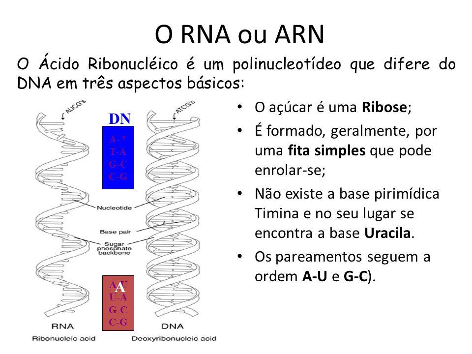 Gene RNA polimerase hnRNA mRNA Citoplasma Transcrição Processamento Núcleo Tradução proteína