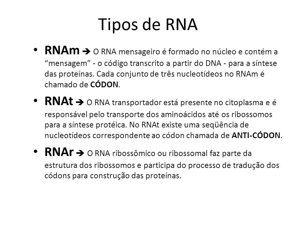 3-RNA ribossômico (RNAr) é o RNA que ocorre em maior quantidade nas células. Esse RNA é encontrado no nucléolo, onde é produzido, e no citoplasma, ass