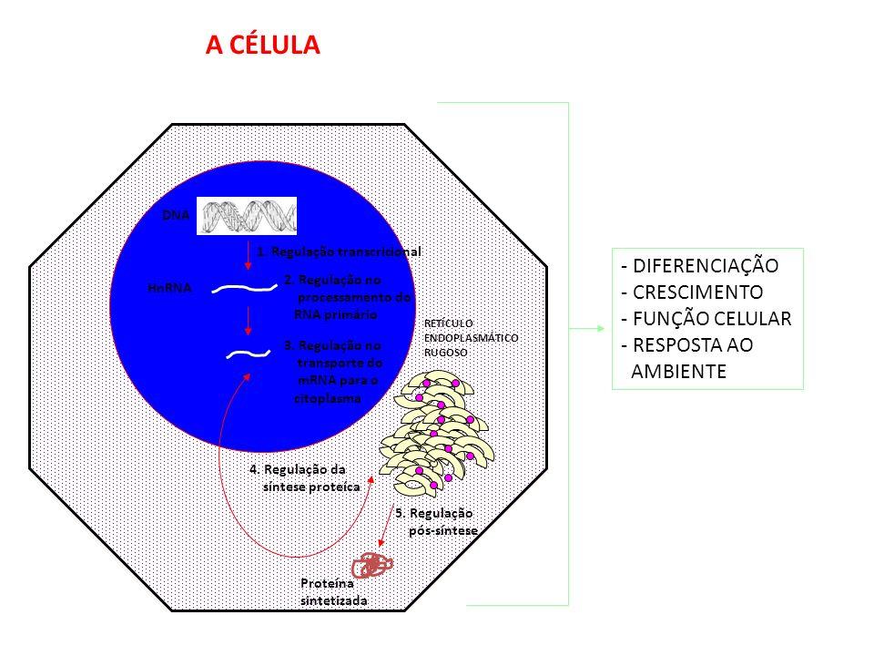 1966 – NIRENBERG, KHORANA e OCHOA Seqüências sucessivas de três nucleotídeos do DNA (codon) determinam a seqüência de aminoácidos de uma proteína O CÓ