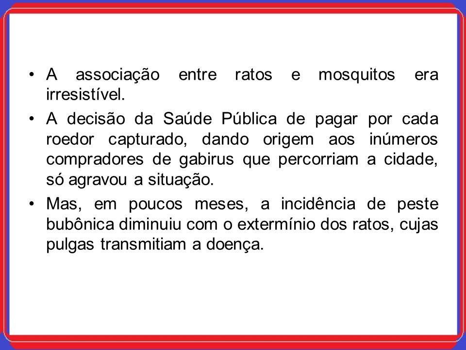 A associação entre ratos e mosquitos era irresistível. A decisão da Saúde Pública de pagar por cada roedor capturado, dando origem aos inúmeros compra