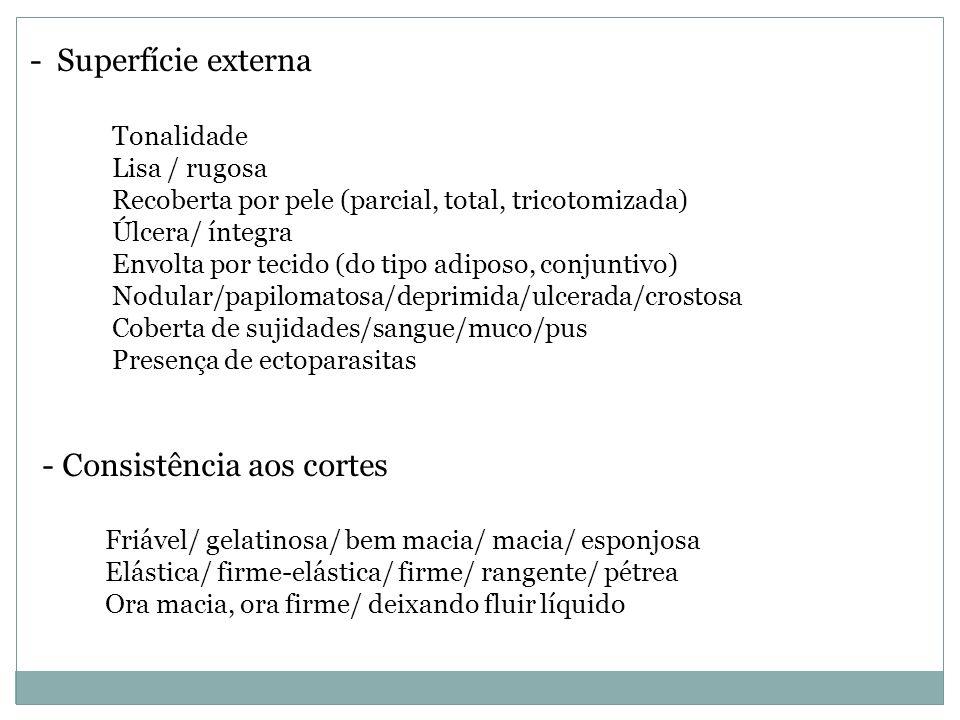 - Superfície externa Tonalidade Lisa / rugosa Recoberta por pele (parcial, total, tricotomizada) Úlcera/ íntegra Envolta por tecido (do tipo adiposo,