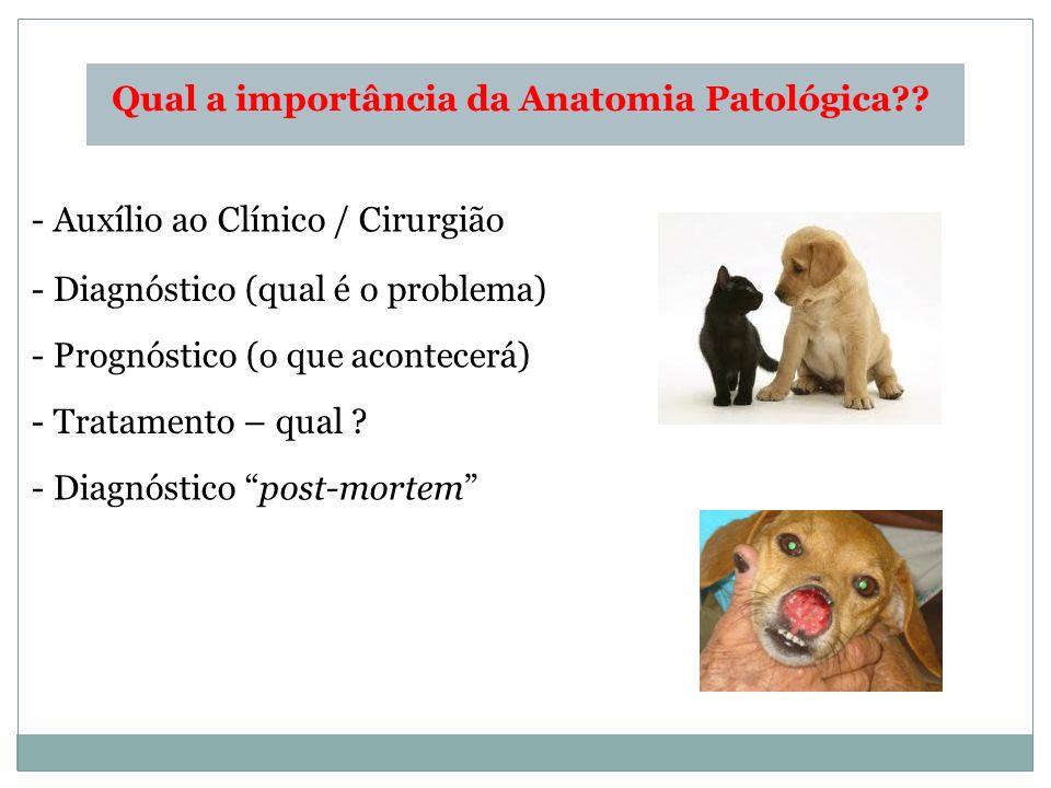 Qual a importância da Anatomia Patológica?? - Auxílio ao Clínico / Cirurgião - Diagnóstico (qual é o problema) - Prognóstico (o que acontecerá) - Trat