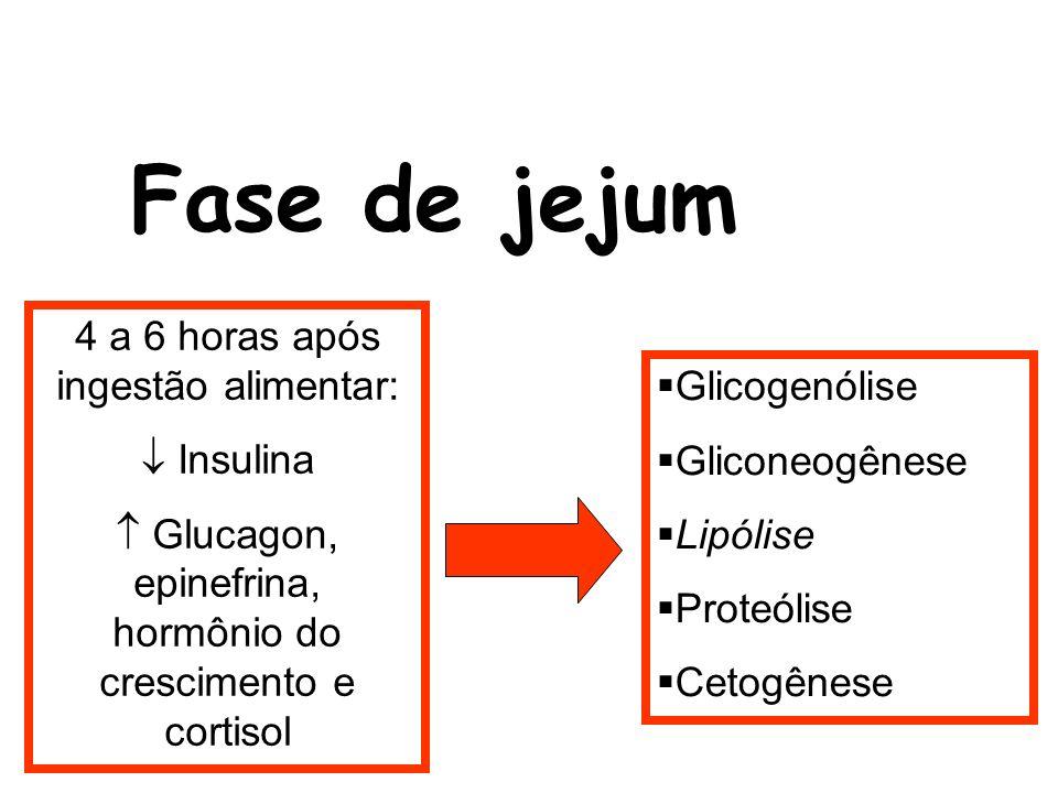 Fase de jejum 4 a 6 horas após ingestão alimentar: Insulina Glucagon, epinefrina, hormônio do crescimento e cortisol Glicogenólise Gliconeogênese Lipó