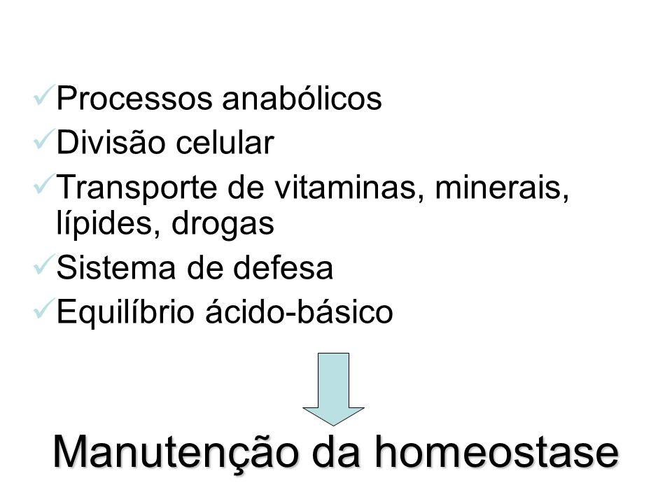Processos anabólicos Divisão celular Transporte de vitaminas, minerais, lípides, drogas Sistema de defesa Equilíbrio ácido-básico Manutenção da homeos