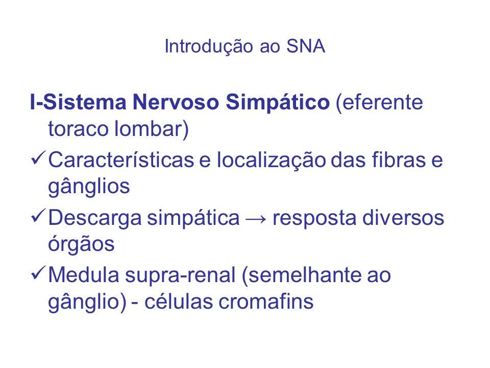I-Sistema Nervoso Simpático (eferente toraco lombar) Características e localização das fibras e gânglios Descarga simpática resposta diversos órgãos M