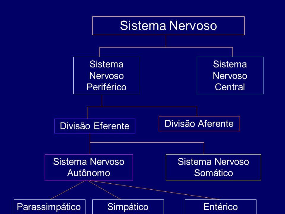 Sistema Nervoso Sistema Nervoso Periférico Sistema Nervoso Central Divisão Eferente Divisão Aferente Sistema Nervoso Autônomo Sistema Nervoso Somático