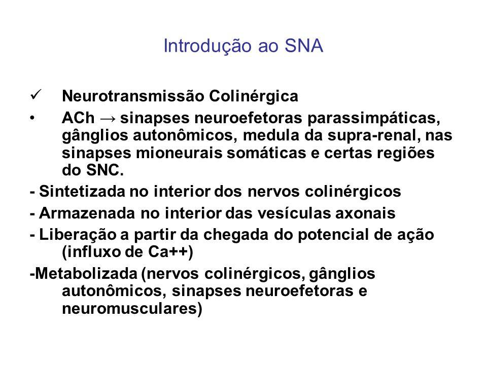 Introdução ao SNA Neurotransmissão Colinérgica ACh sinapses neuroefetoras parassimpáticas, gânglios autonômicos, medula da supra-renal, nas sinapses m