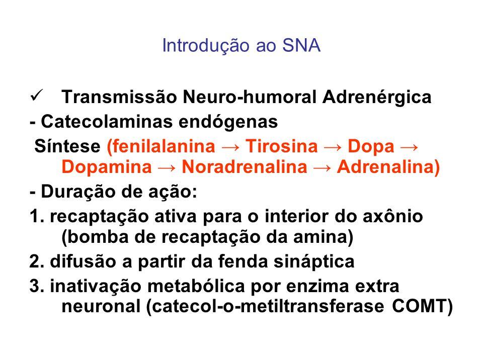 Introdução ao SNA Transmissão Neuro-humoral Adrenérgica - Catecolaminas endógenas Síntese (fenilalanina Tirosina Dopa Dopamina Noradrenalina Adrenalin