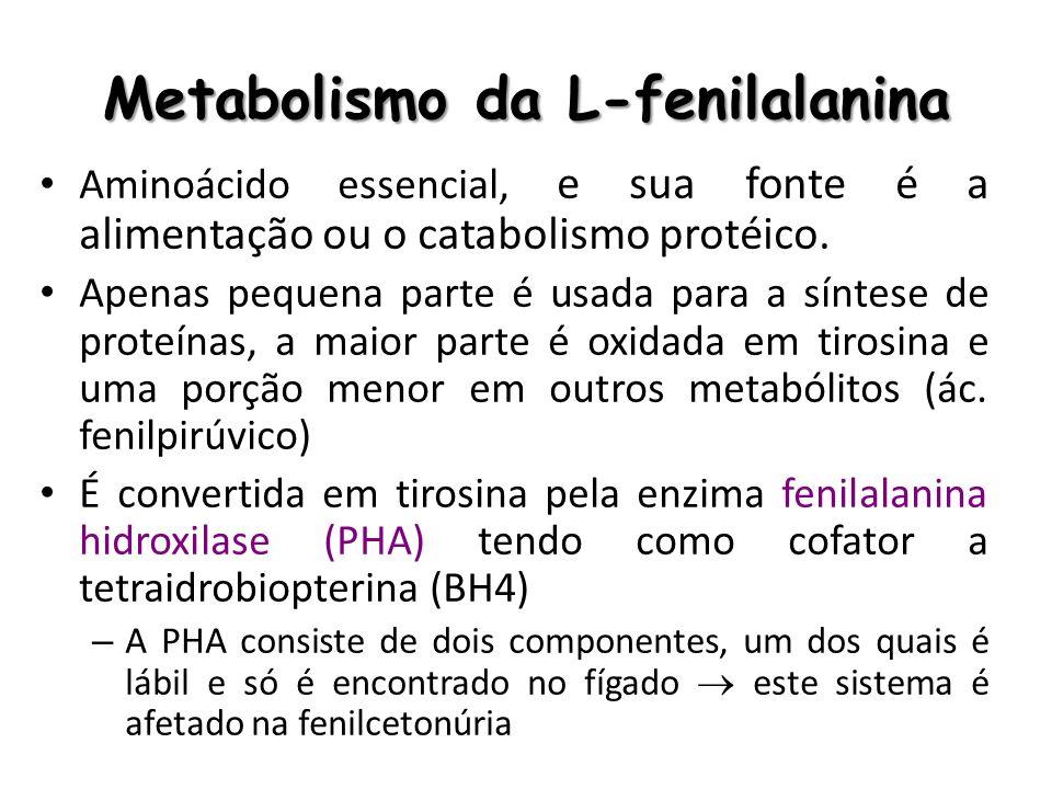 Metabolismo da L-fenilalanina Aminoácido essencial, e sua fonte é a alimentação ou o catabolismo protéico. Apenas pequena parte é usada para a síntese