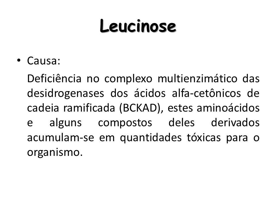 Leucinose Causa: Deficiência no complexo multienzimático das desidrogenases dos ácidos alfa-cetônicos de cadeia ramificada (BCKAD), estes aminoácidos