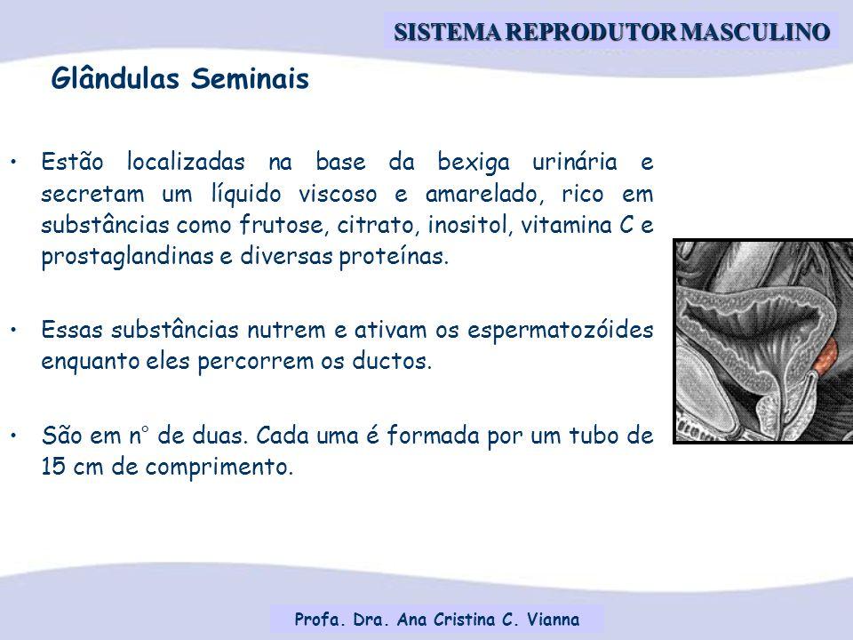 Profa.Dra. Ana Cristina C.